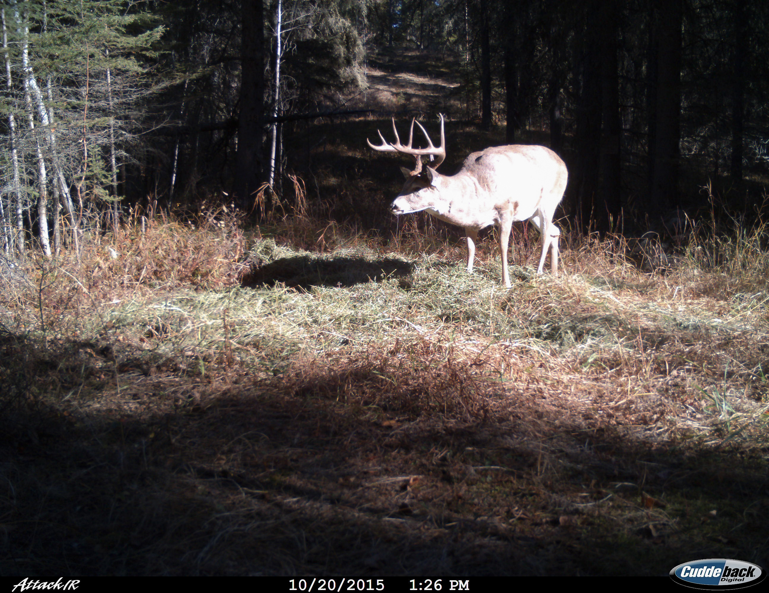 Recent Trail cam pics