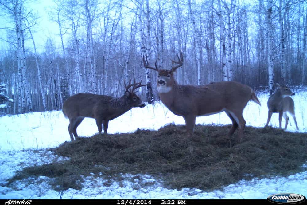 TONS OF TRAIL CAM PHOTOS!!
